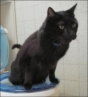 Be aware of your cats habits - including her/his toilet routines.  It's a valuable early diagnostic!