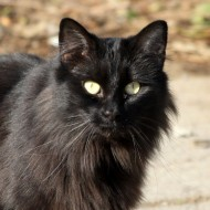 Feline Renal Failure is NOT an immediate death sentence!  Your can offer a variety of feline treatment options to give your cat more days of quality with you!