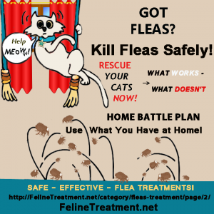 Fleas Treatment can be safe. Natural flea remedies that work! - Flea Treatment For Cats